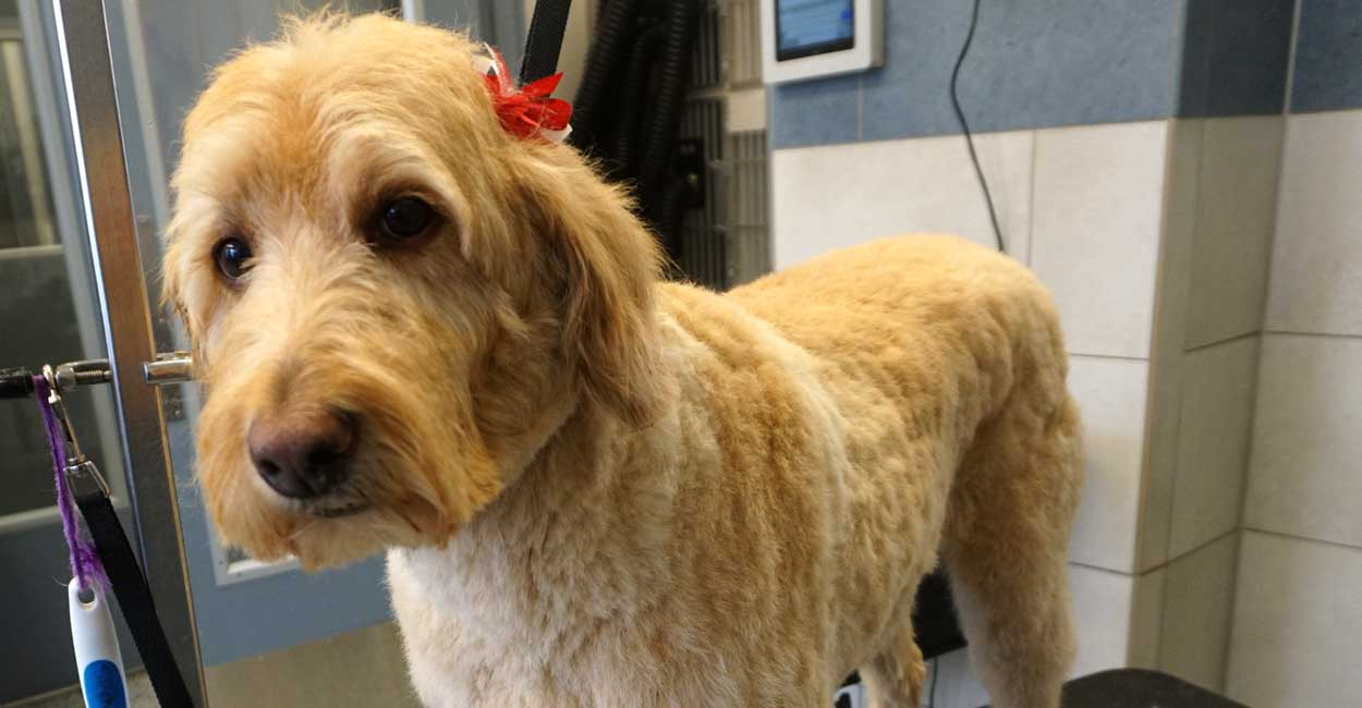Chicago Dog Grooming - Get Srated