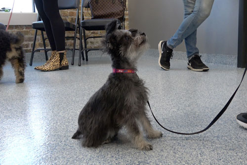 Puppy Manners Dog Training Classes Chicago