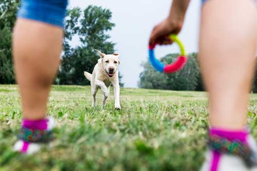 Dog Fun Games Training Classes in Chicago