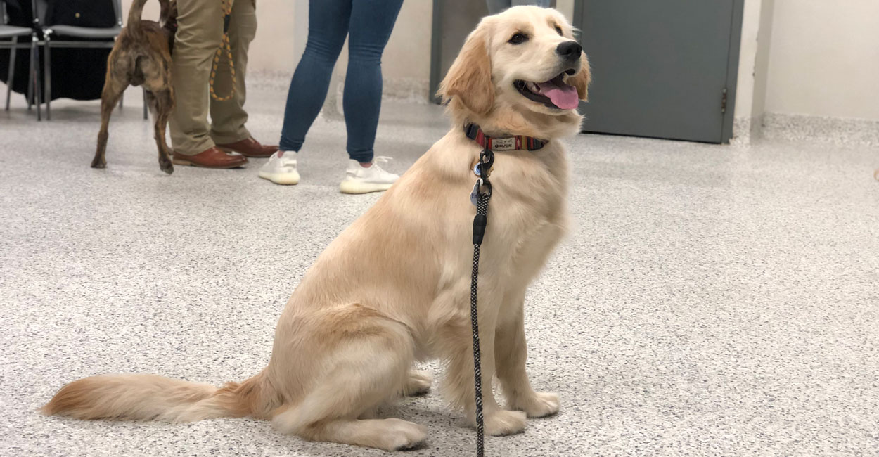 Adult Obedience Dog Training Classes In Chicago