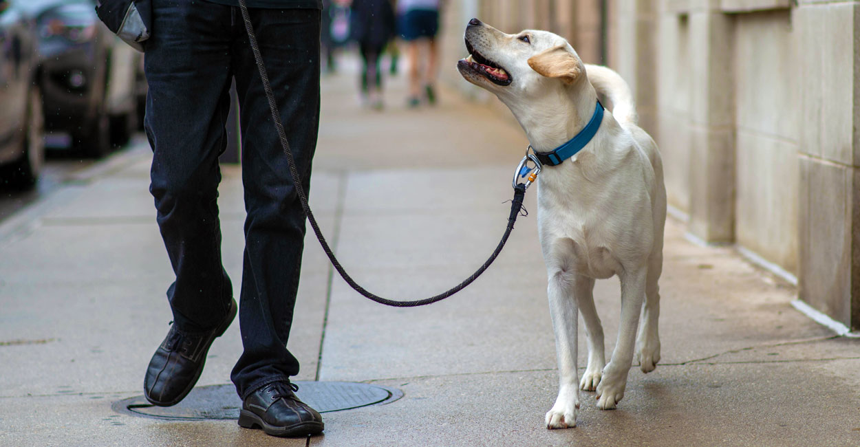 dog-training-leash-walking-focus-chicago