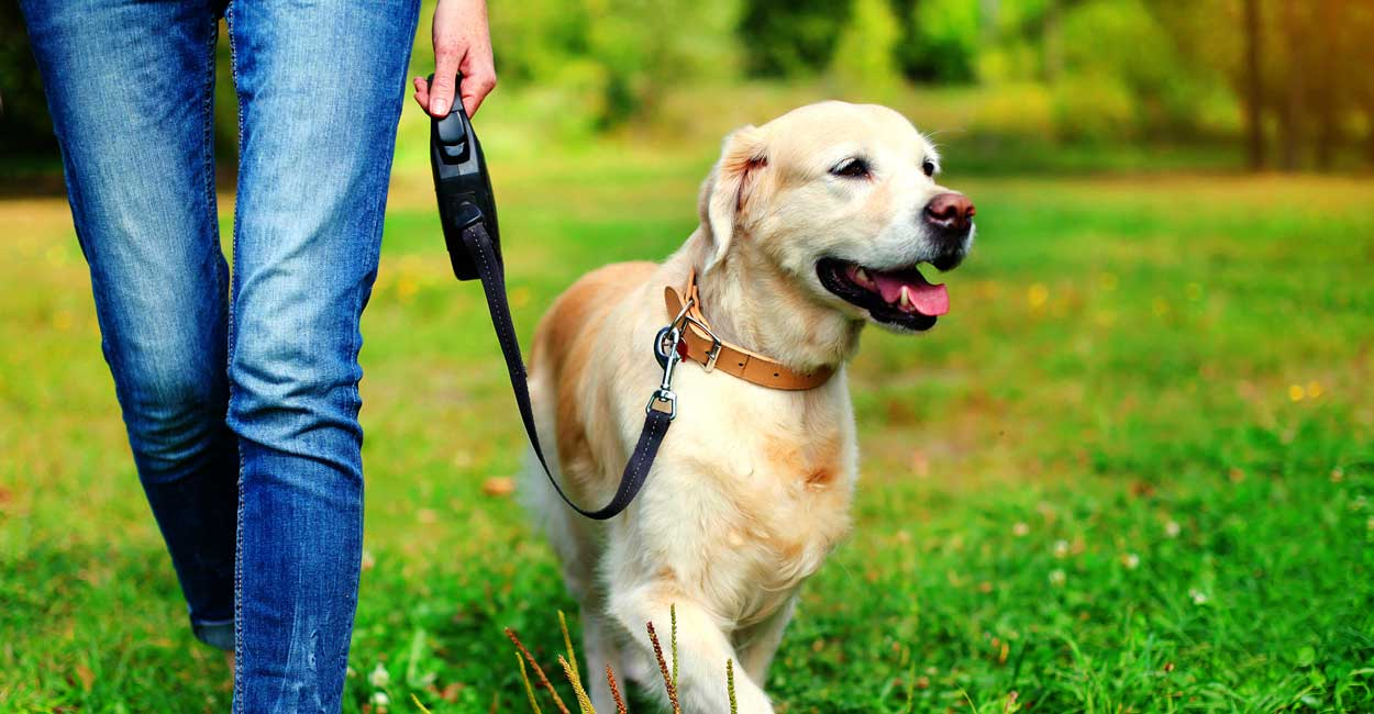 Why Tucker Pup's Dog Training?