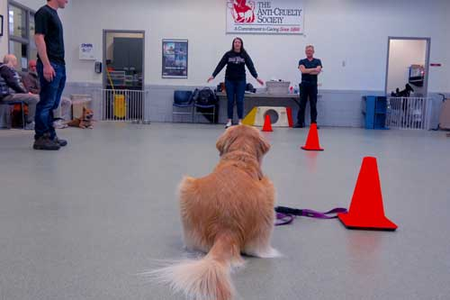 Intermediate Manners Dog Training Classes Chicago